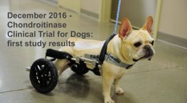 Chondroitinase clinical trial for dogs