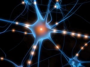Spinal cord injury cure research